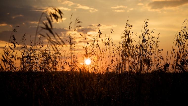 sunrise-through-the-grass