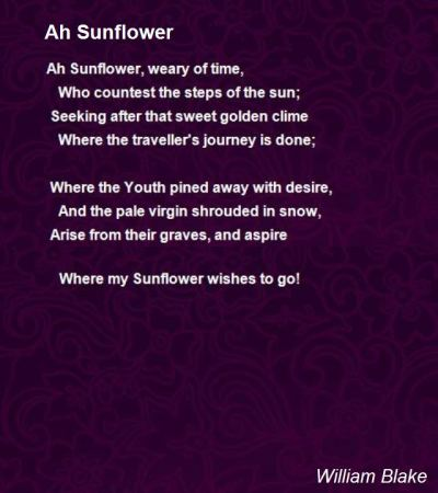 ah-sunflower